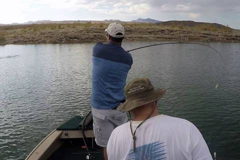 Jed Topham (Henderson) winds up for a cast into a striper boil at Lake Mead. The boil can be se ...
