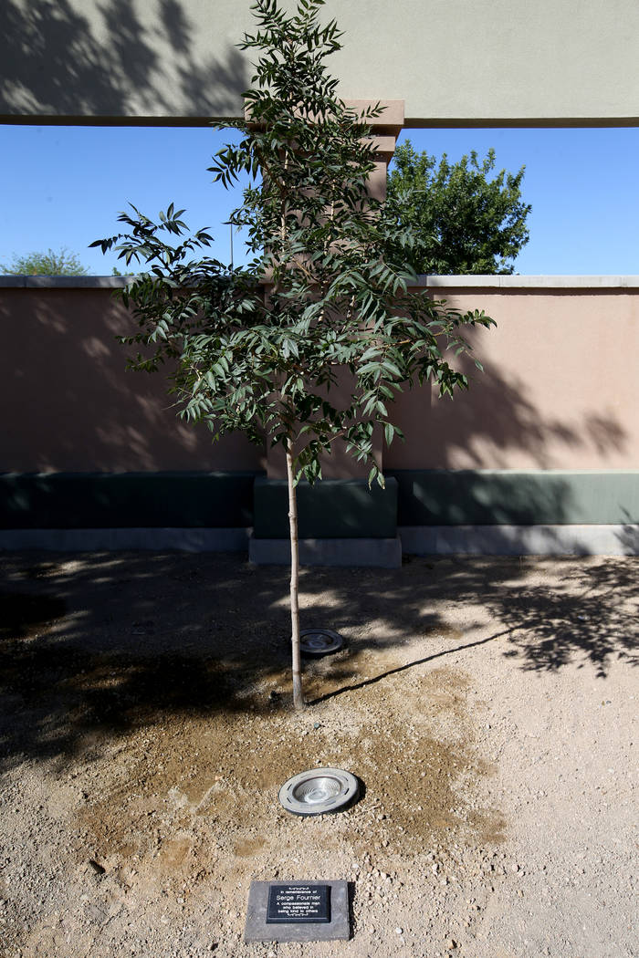 A plaque and tree dedicated to 74-year-old Serge Fournier, the Las Vegas man who died after bei ...