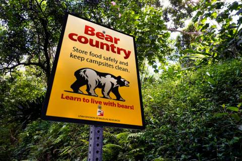 This 2017 photograph provided by the Utah Division of Wildlife Resources shows a bear sign. Wil ...