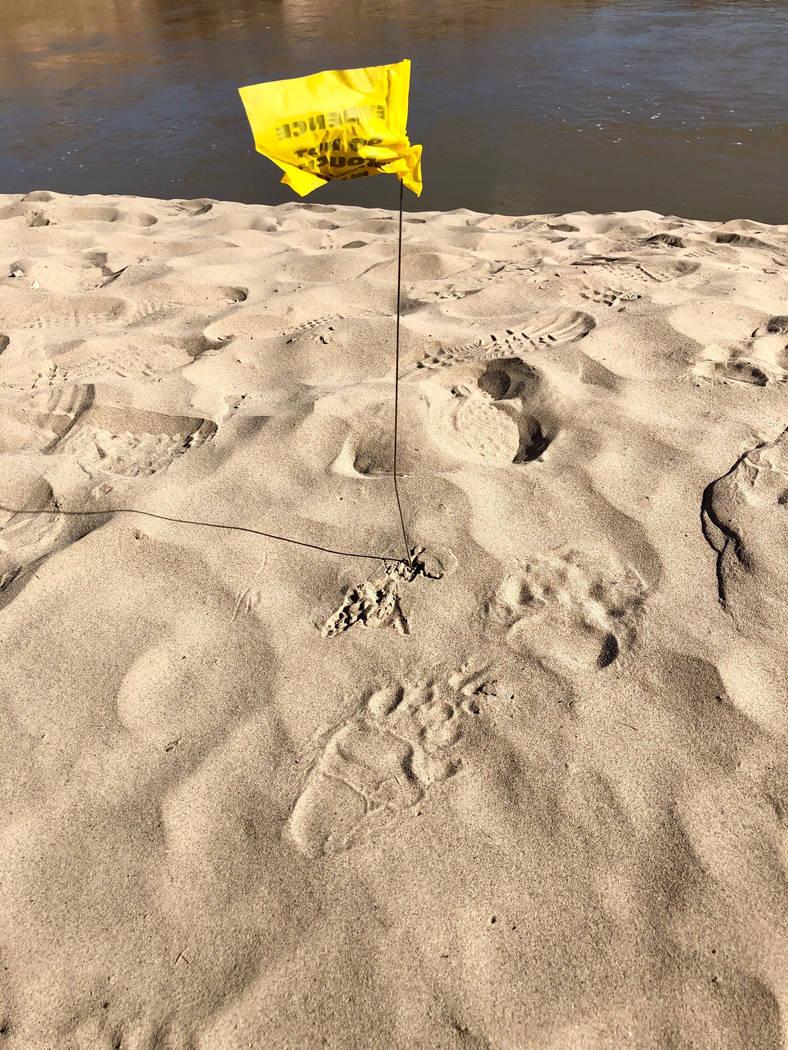 Bears tracks are shown. Courtesy photo.