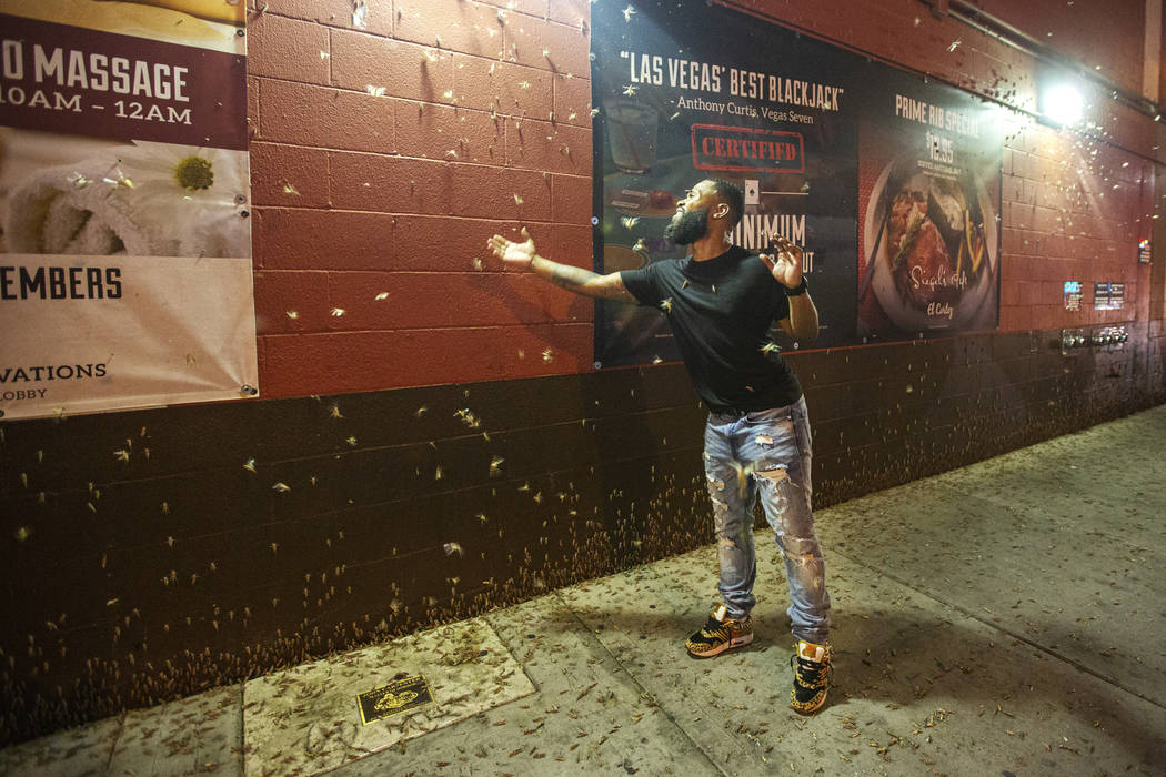 Dorian Williams from Houston checks out the grasshoppers outside the El Cortez in downtown Las ...
