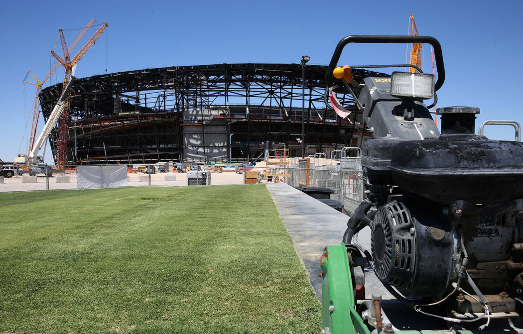 Several types of grasses are seen outside Allegiant Stadium on Friday, Aug. 16, 2019 as the sta ...