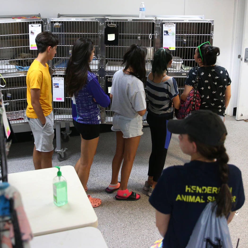 People look at cats for adoption during the Clear the Shelters event at the City of Henderson A ...