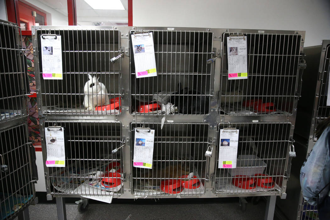 Rabbits for adoption during the Clear the Shelters event at the City of Henderson Animal Care a ...