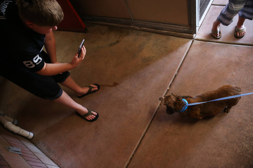 Cole Lord, 11, using FaceTime, shows his mother a 15-year-old dog for adoption during the Clear ...