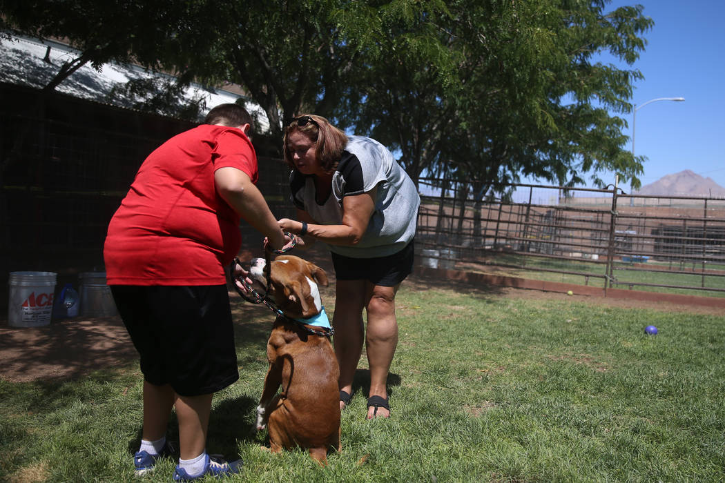 Aiden Fox, 11, left, with his mother Kara, of Henderson, play with a dog for adoption during th ...