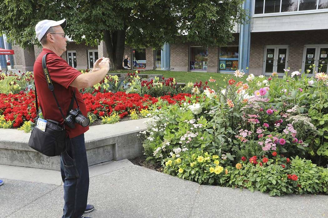 Central Florida resident Paul Leake photographs a dahlia garden in Town Square in Anchorage, Al ...
