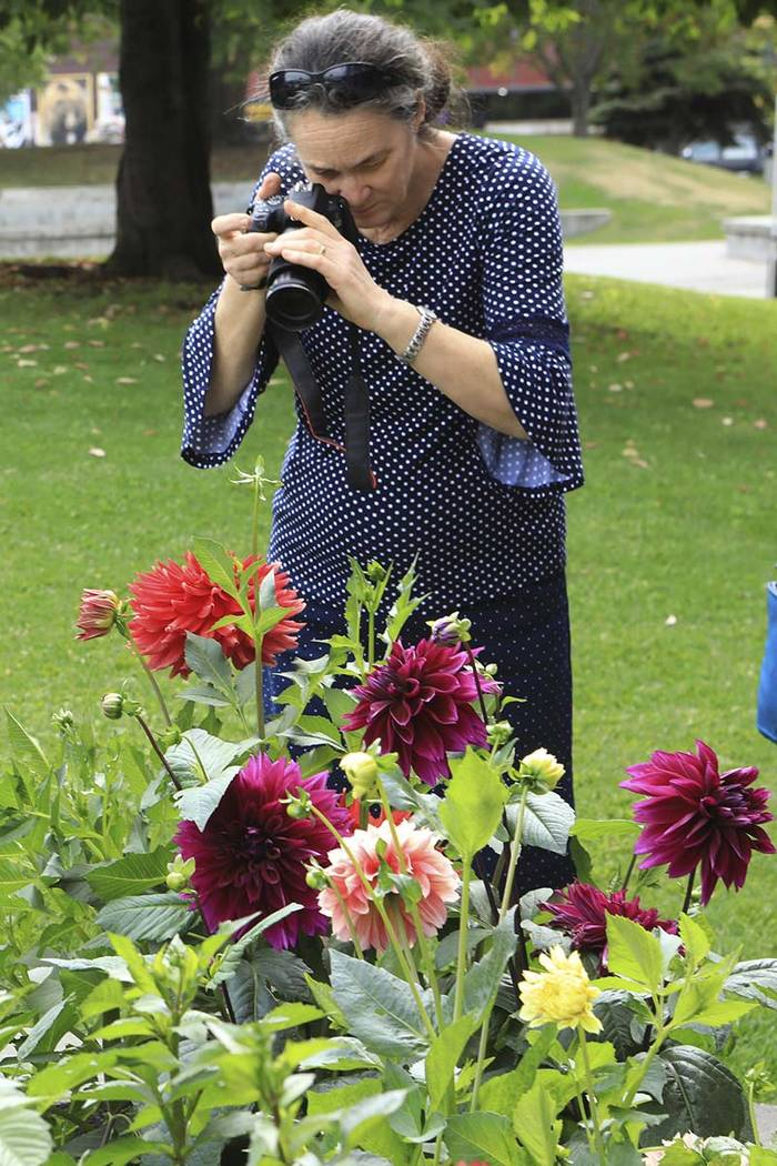 Denise Armitage of Toowoomba, Queensland, Australia, photographs dahlias at gardens in Town Squ ...