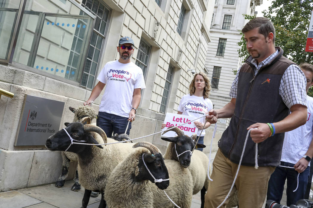 Demonstrators walk a flock of sheep outside British Government's Department of International Tr ...