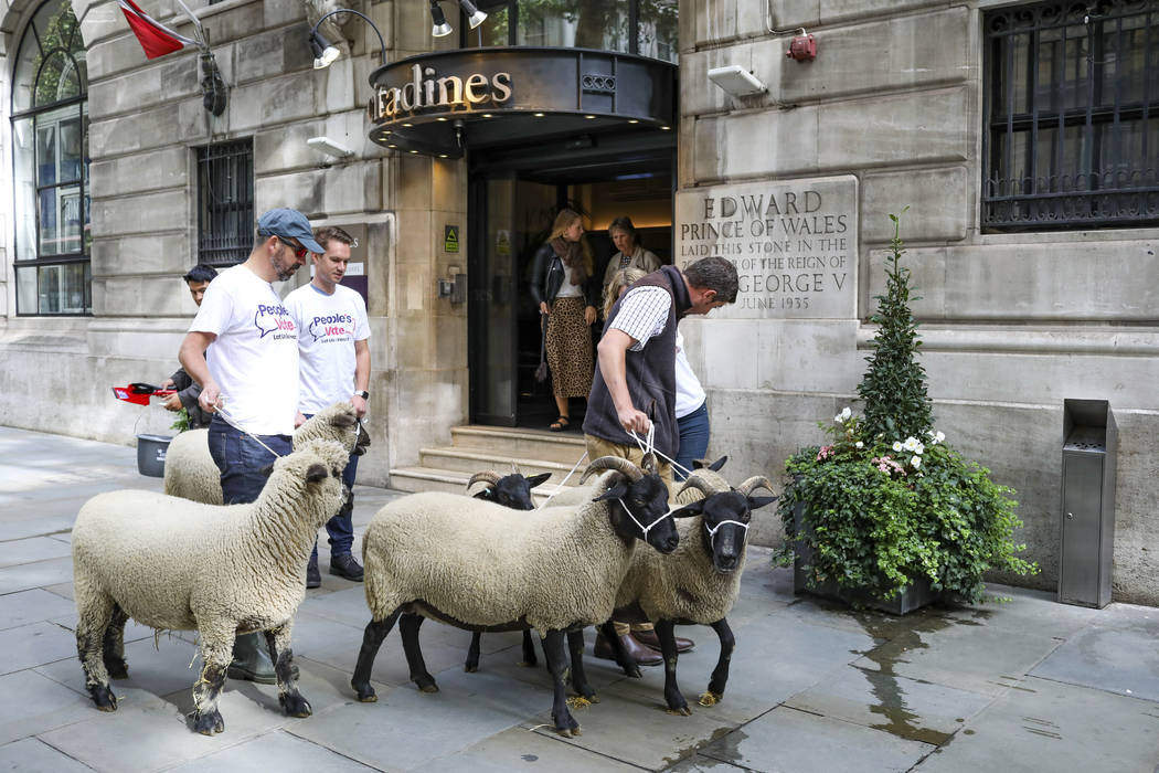 Demonstrators walk a flock of sheep through the streets as part of a protest against Brexit, in ...