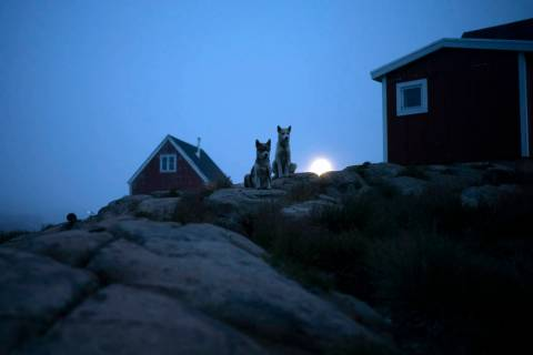Dogs sit outside a home in Kulusuk, Greenland, early Thursday, Aug. 15, 2019. (AP Photo/Felipe ...