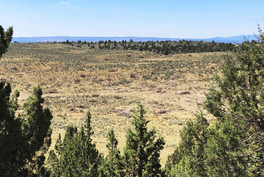 This Aug. 15, 2019 photo shows dozens of juniper trees cut down as part of a giant project to r ...