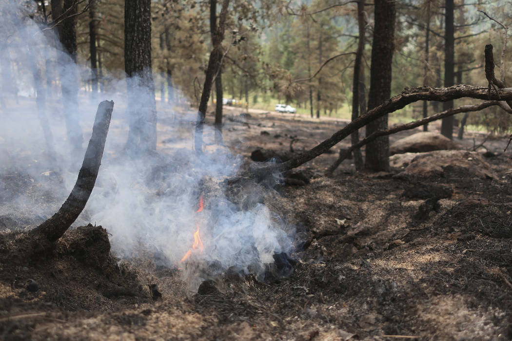 A tree stump smolders in an area scorched by fire in the Coconino National Forest near Flagstaf ...
