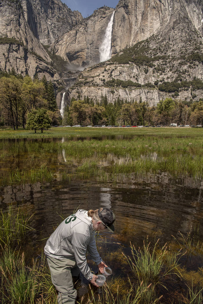 FILE - In this May 3, 2019, file photo, provided by the National Park Service, Yosemite Nationa ...