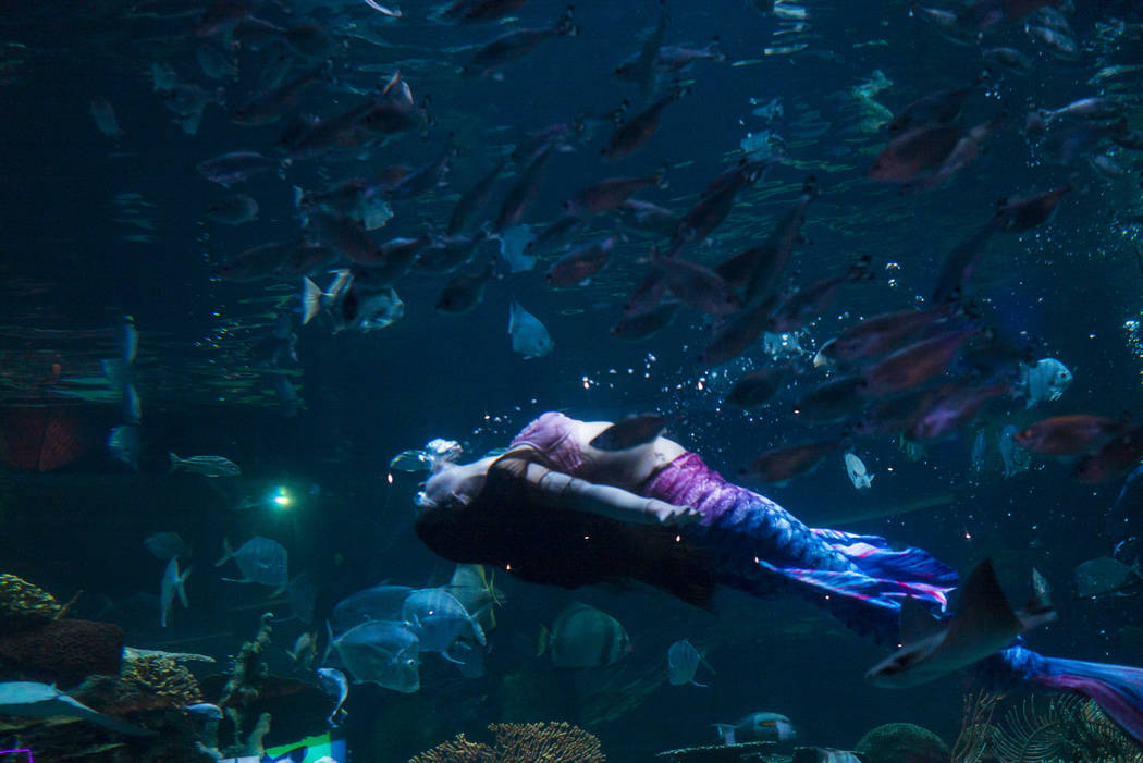 McKenzie Kawano works as a mermaid at the aquarium at the Silverton in Las Vegas on Thursday, A ...