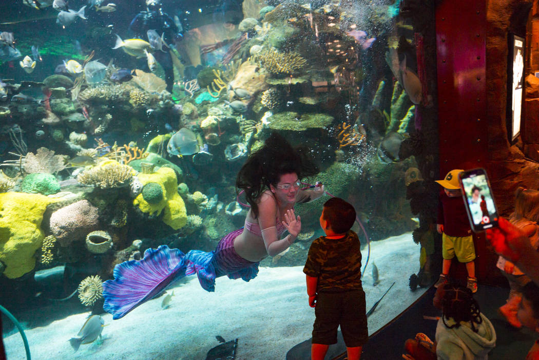 McKenzie Kawano, who works as a mermaid at the aquarium at the Silverton, left, waves at young ...