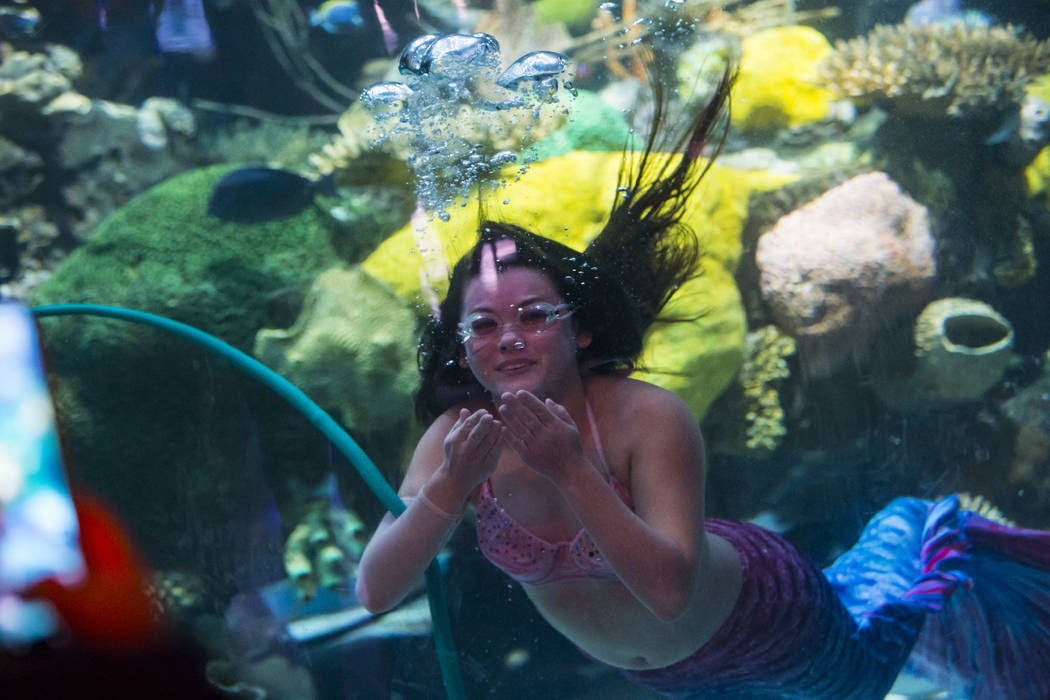 McKenzie Kawano, who works as a mermaid at the aquarium at the Silverton, entertains guests in ...