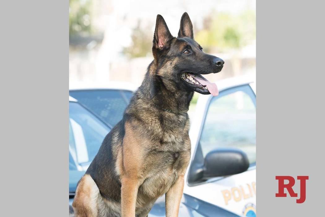 K-9 Ozzy (Long Beach Police Department via Facebook)
