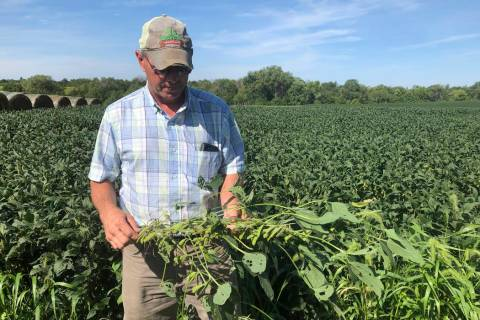 Farmer Randy Miller is shown with his soybeans, Thursday, Aug. 22, 2019, at his farm in Lacona, ...