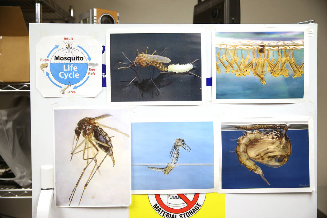 A freezer containing mosquitos trapped out in the field inside a laboratory at the Southern Nev ...