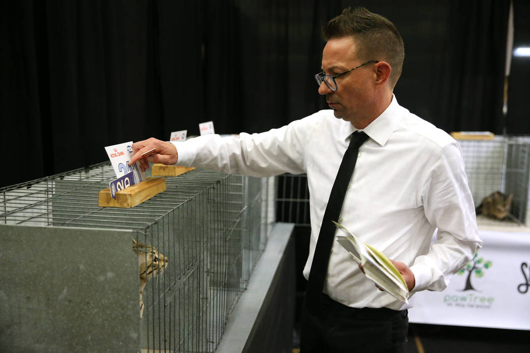 Judge Jamie Christian scores Kibo the cat during The International Cat Association's (TICA) 4 ...