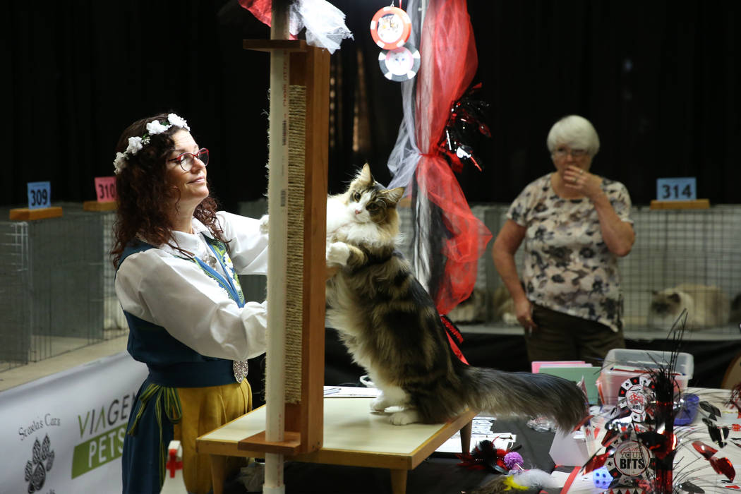 Judge Asa Broing looks at a cat during The International Cat Association's (TICA) 40th ...