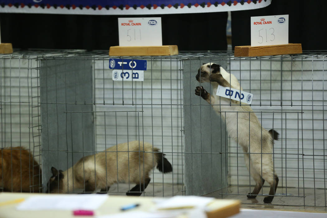 Cats wait during judging at The International Cat Association's (TICA) 40th annual show at the ...