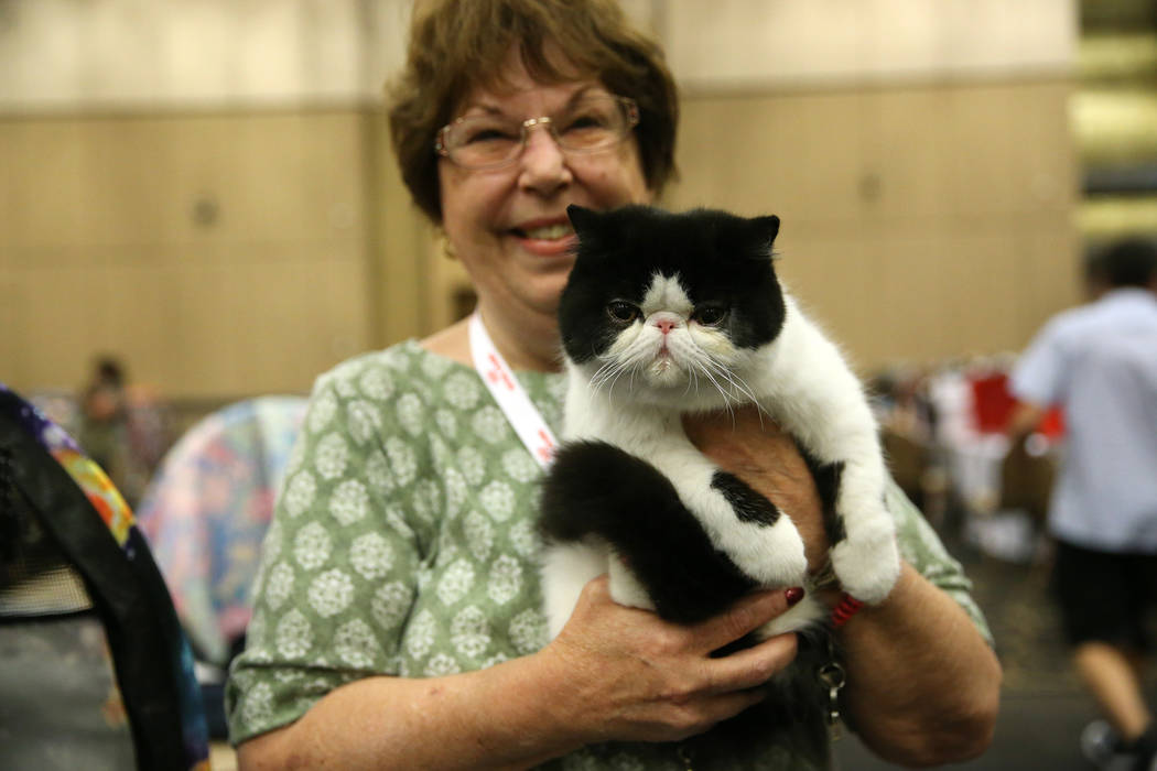 Marcia Baumann of Orange County, Calif. shows her cat competing during The International C ...