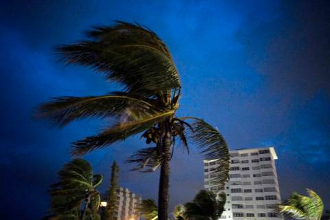 Strong winds move the palms of the palm trees at the first moment of the arrival of Hurricane D ...