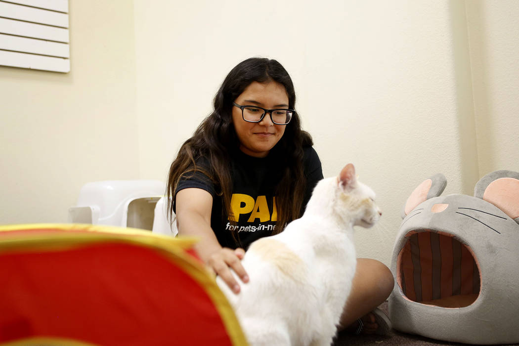 Anaisa Maestas, 13, plays with an adoptable cat at the Rescued Treasures Cat Cafe, Tuesday, Aug ...