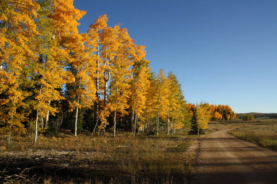 There are hundreds of miles of gravel Forest Service roads to drive in search of vibrant foliag ...