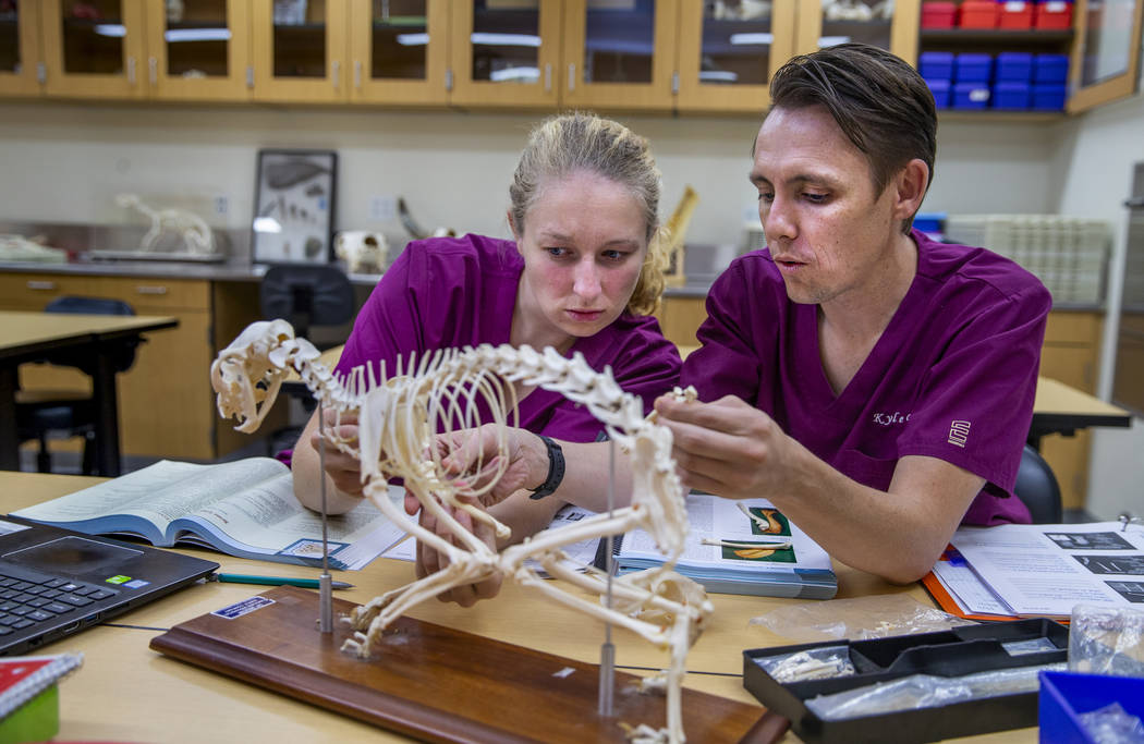 First year students Victoria Geithman, left, and Kyle Granger study the bones of a cat on a mod ...