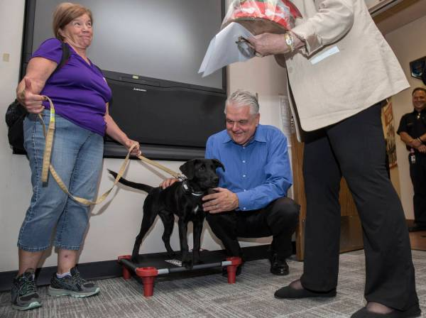 New Las Vegas Fire therapy dog's journey began in South