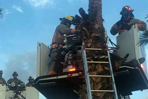 The Las Vegas Fire Department rescued a man from a palm tree in east Las Vegas Sunday evening, ...