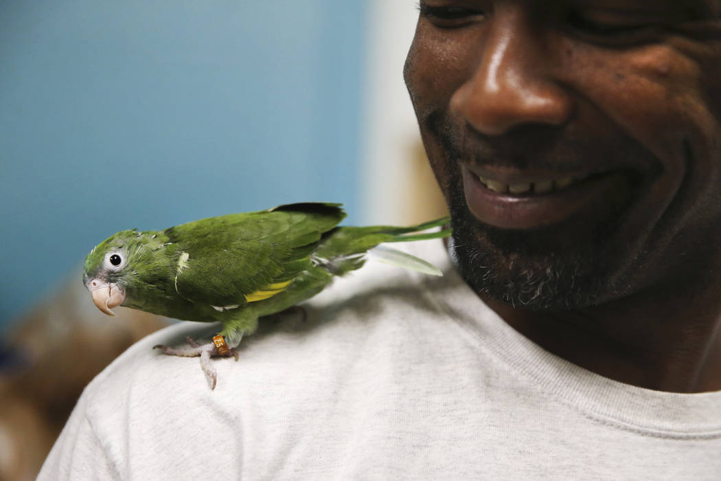 Jovie Edwards shows a parrotlet, also known as a pocket parrot, confiscated from the Las Vegas ...