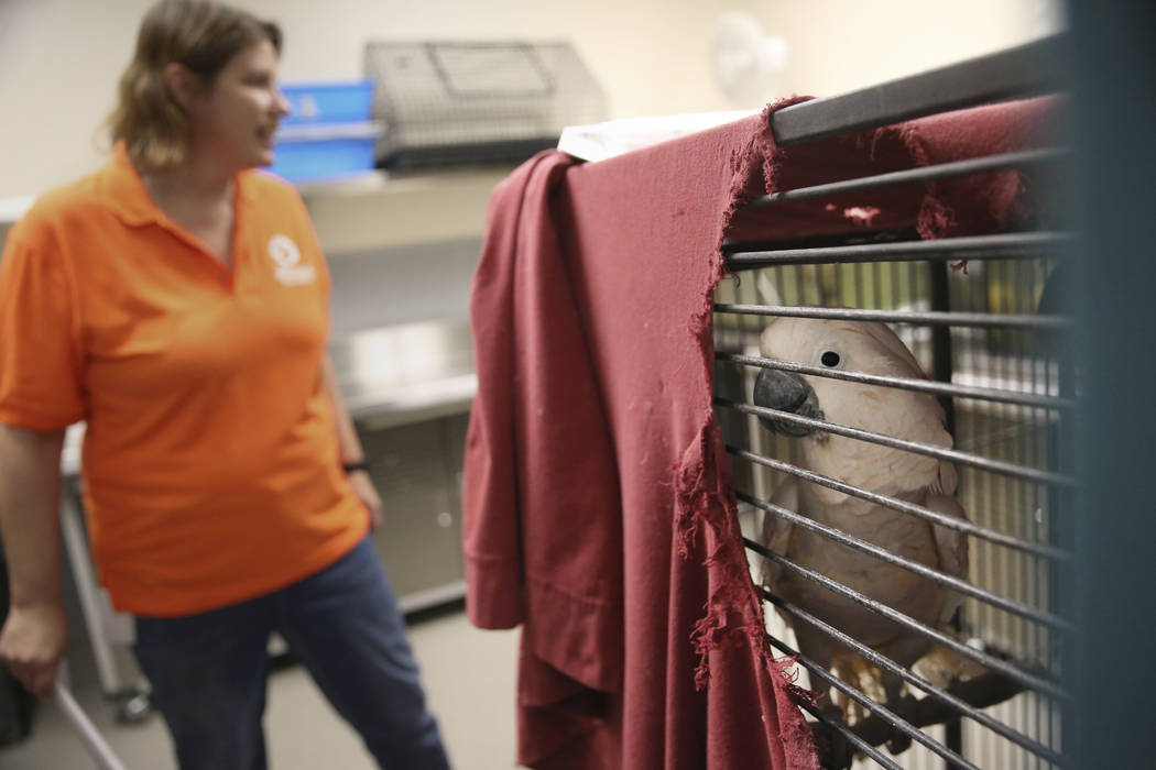 Admissions manager Kathie Mizak shows a cockatoo confiscated from the Las Vegas home of Susan M ...