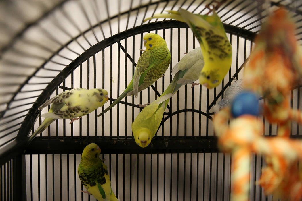 Confiscated birds from the Las Vegas home of Susan Mechsner, at the The Animal Foundation in La ...