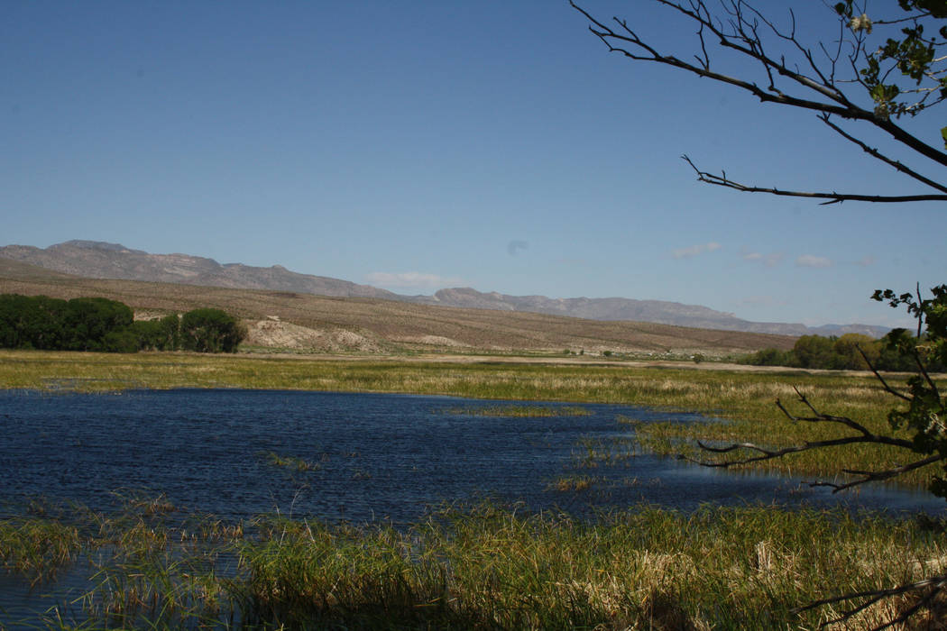 The refuge encompasses 5,382 acres and is a critical resting and feeding spot for migrating bir ...