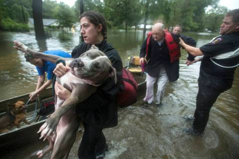 Jade McLain carries Thor out of a boat as she and Fred Stewart were rescued from their flooded ...