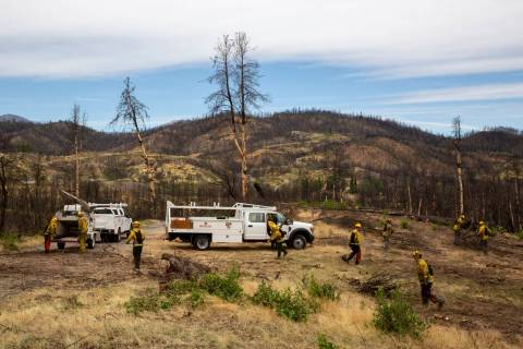 In this photo taken June 6, 2019, in the footprint of the 2018 Carr Fire, members of Cal Fire a ...