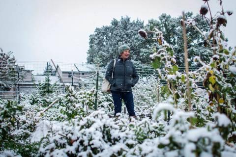 Garden City Harvest grower Brihannala Morgan gazes over her five-row plot after harvesting the ...
