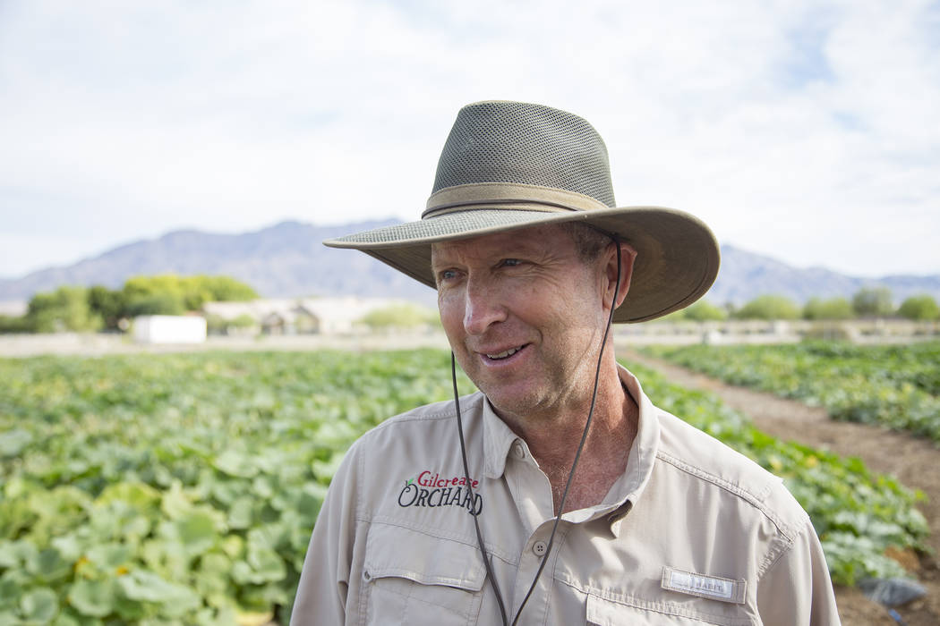 Mark Ruben, director of Gilcrease Orchard, speaks to the Review-Journal at the pumpkin field at ...
