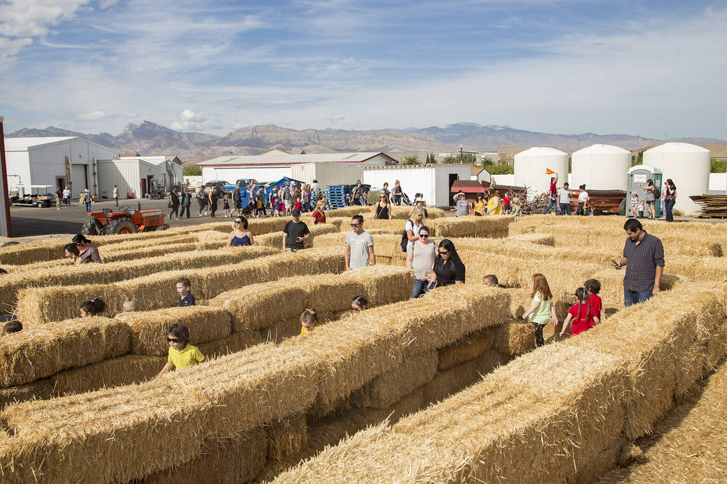 Guests run through the hay maze at Gilcrease Orchard in Las Vegas, Thursday, Sept. 26, 2019. (R ...