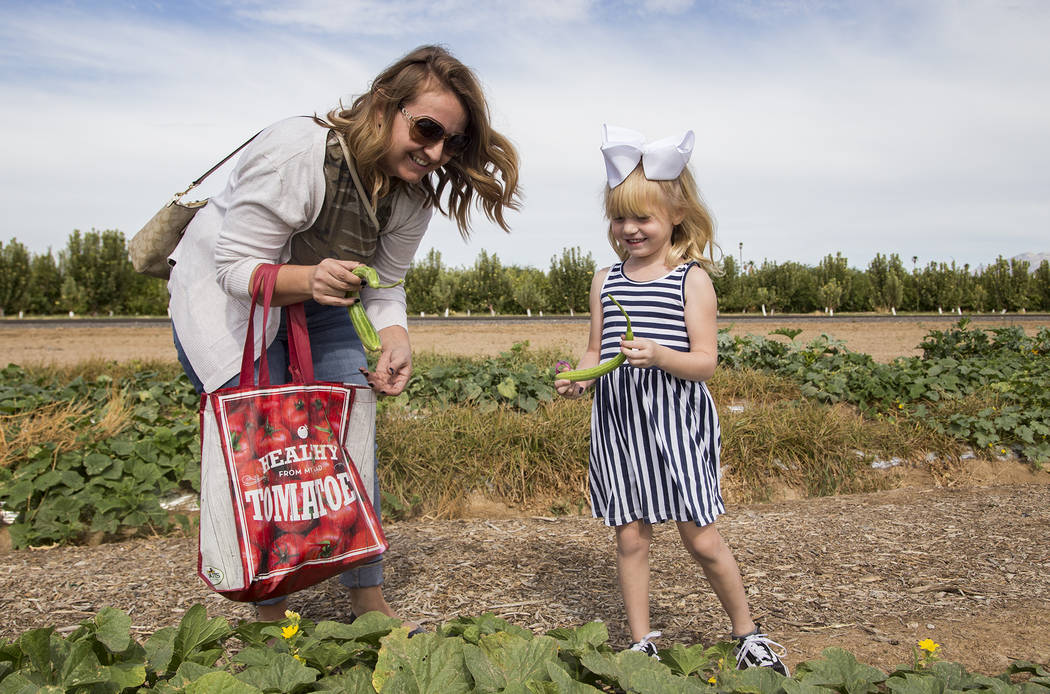 Christine Garcia helps her daughter Natalie Garcia, 4, pick cucumbers at Gilcrease Orchard in L ...