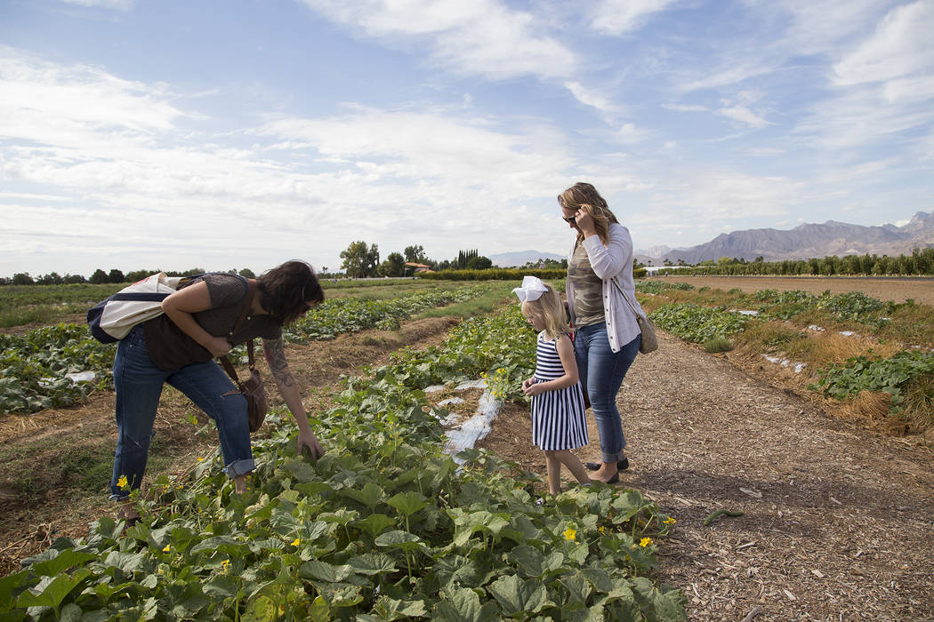 Lina Vasquez, left, looks for cucumbers with friend Christine Garcia and her daughter Natalie G ...