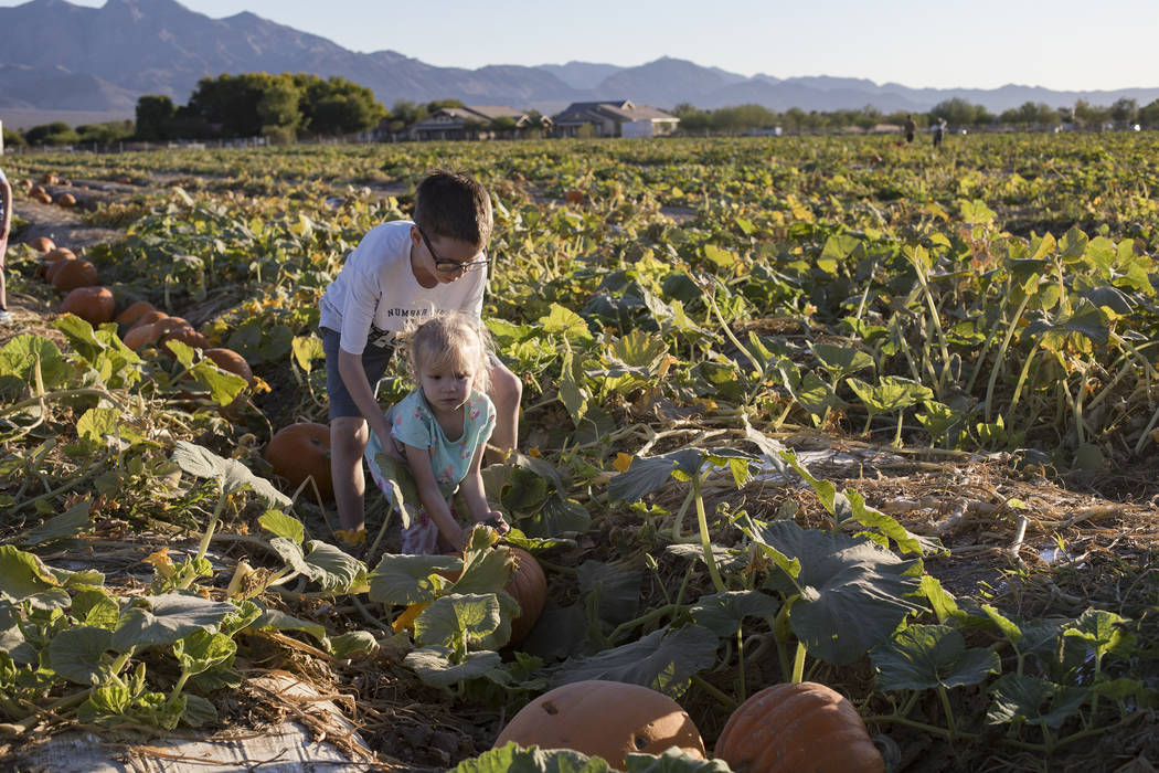 Elijah W., 9, helps his sister Emma-lee W., 5, pick up a pumpkin at Gilcrease Orchard in Las Ve ...