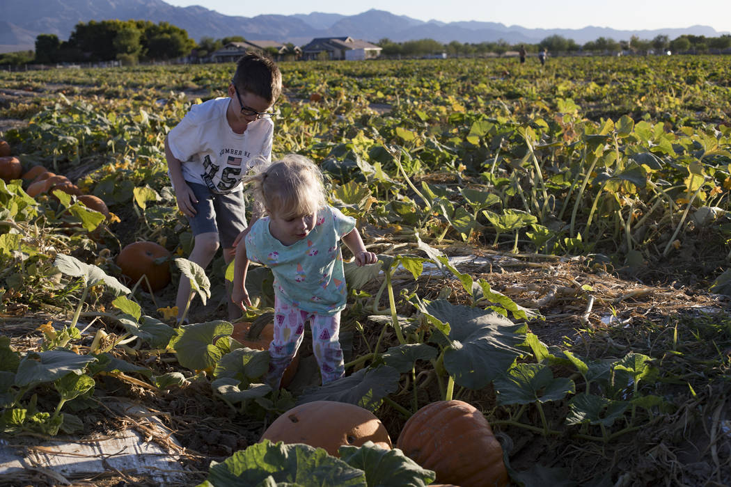 Elijah W., 9, looks for pumpkins with his sister Emma-lee W., 5, at Gilcrease Orchard in Las Ve ...