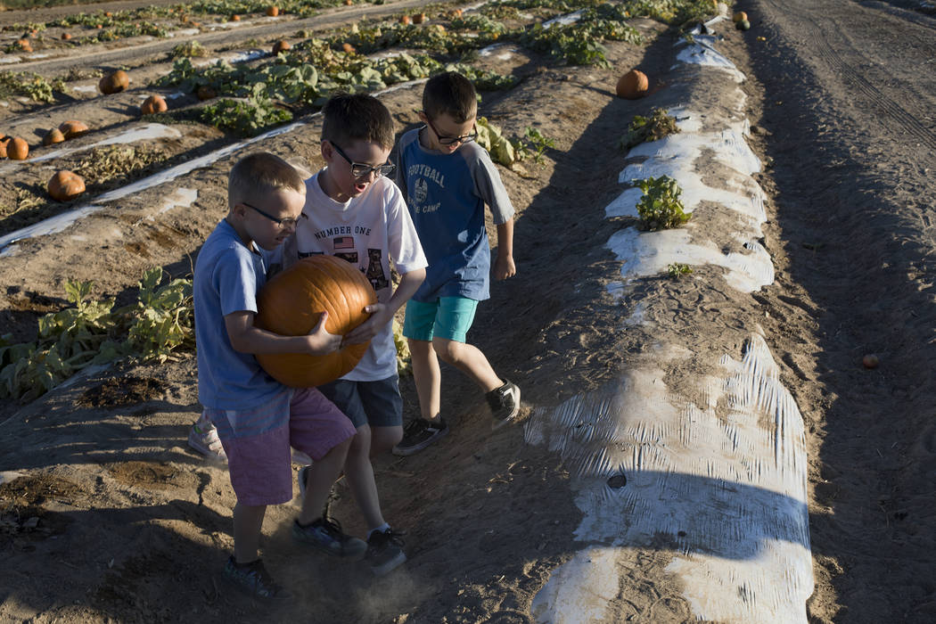 Dennis W., 7, from left, and Elijah W., 9, carry a pumpkin next to their brother Dominic W., 9, ...