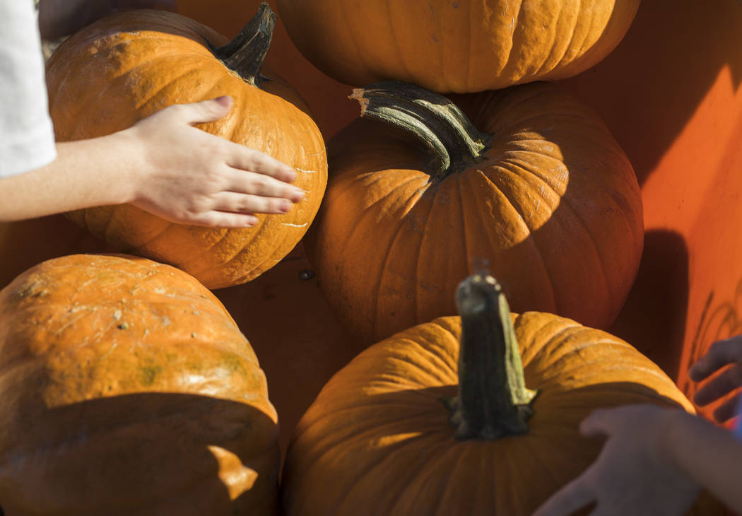 Elijah W., 9, picks up his pumpkin from a wheel barrel while with his family at Gilcrease Orcha ...