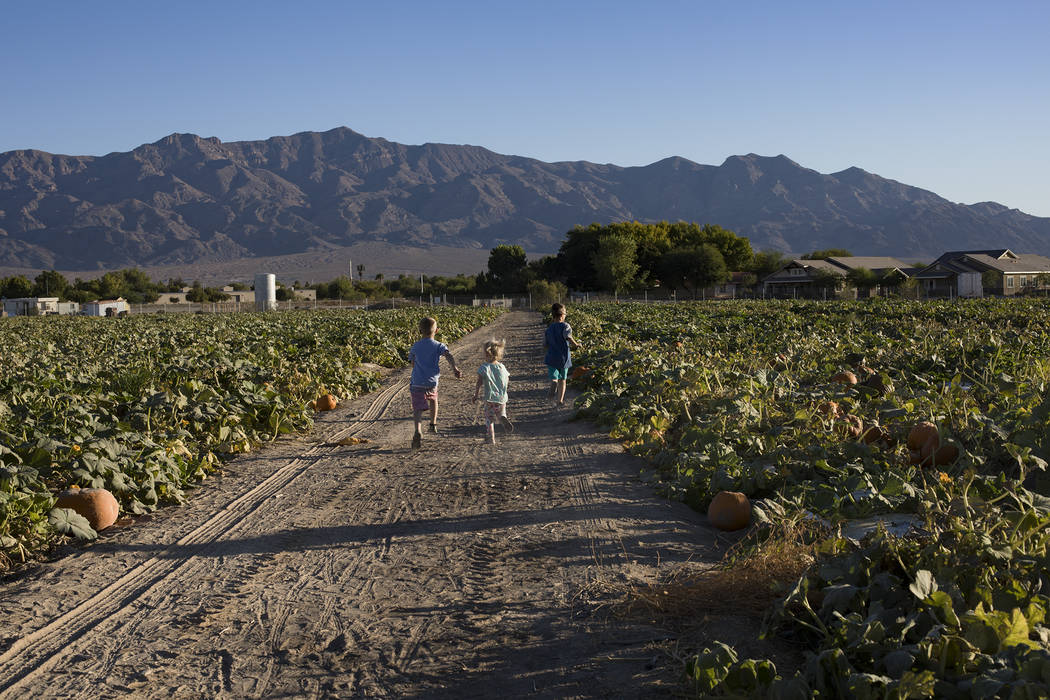 Dennis W., 7, from left, runs with his siblings Emma-lee W., 5, and Dominic W., 9, through the ...